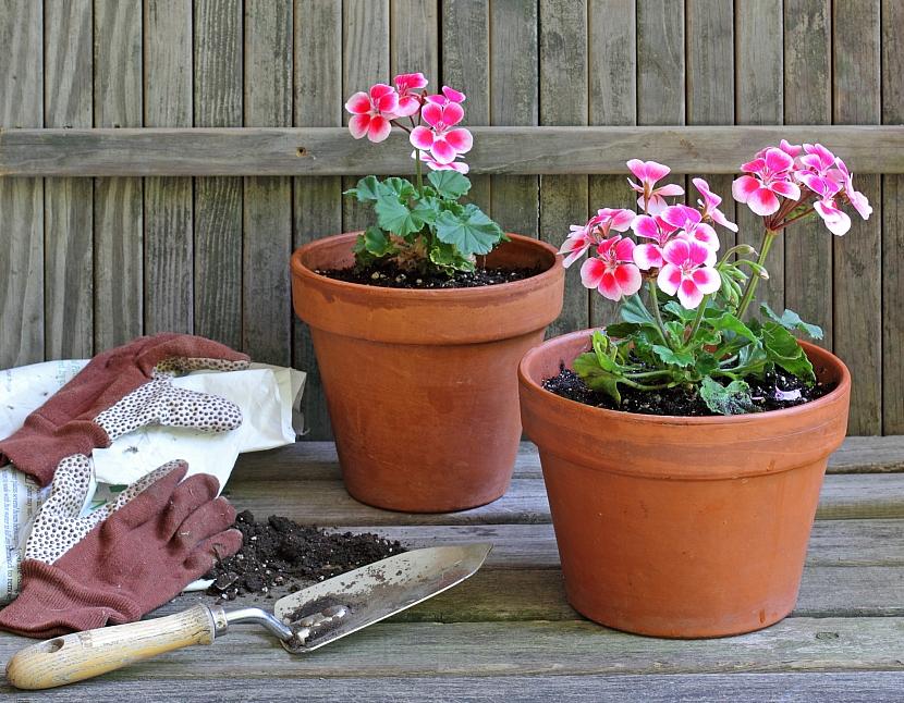 Mladé rostliny