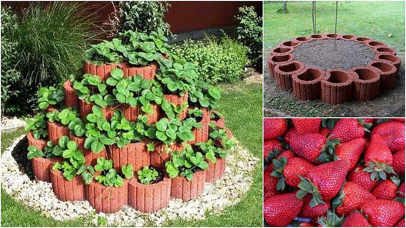 Jak vypěstovat čisté jahody: Betonová pyramida