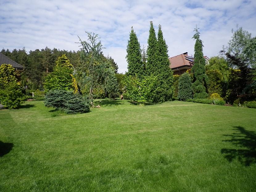 Trávník v zahradě