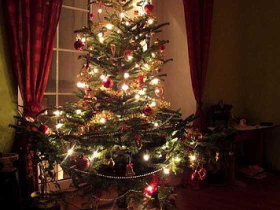 Krátký život vánočního stromku