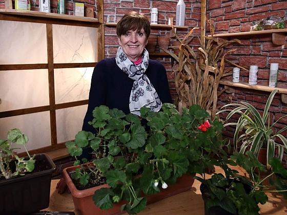 Příprava zazimovaných balkónových rostlin na novou sezónu (Zdroj: archiv FTV Prima)