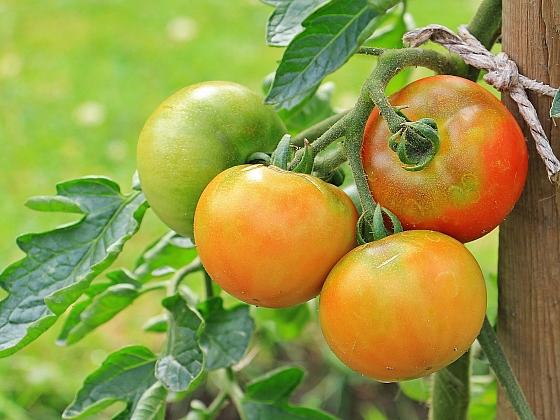 Poradíme vám, jak můžete zachránit poslední plody léta (Zdroj: pixabay.com)