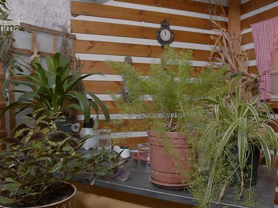 Škůdci pokojových rostlin nejsou nezničitelní (Zdroj: Prima DOMA)
