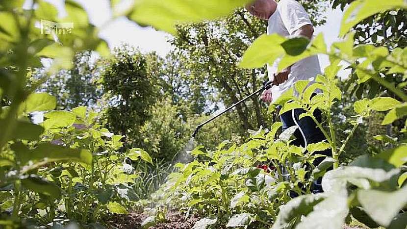 Ani letošní zima nezmenšila počet škůdců, kteří škodí našim zahradám