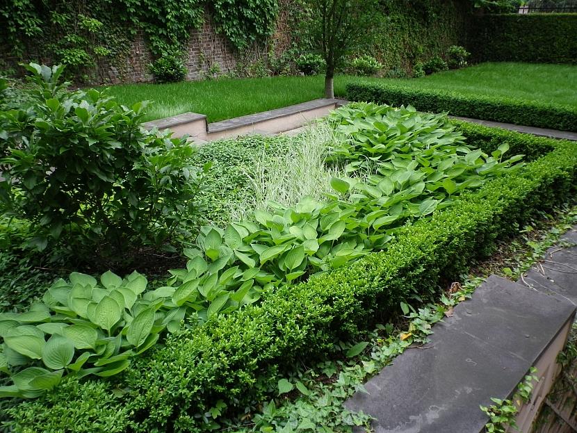 plutek ze zimostrazu(buxus) kolem zahonu