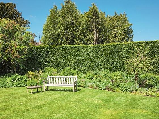 Obnova trávníku