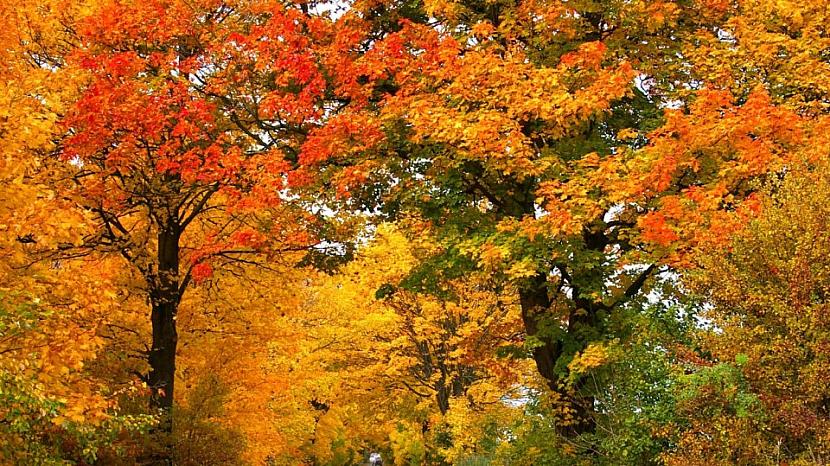 Když na zbarvené listí stromů a keřů zasvítí slunce, jejich krása nás dostane