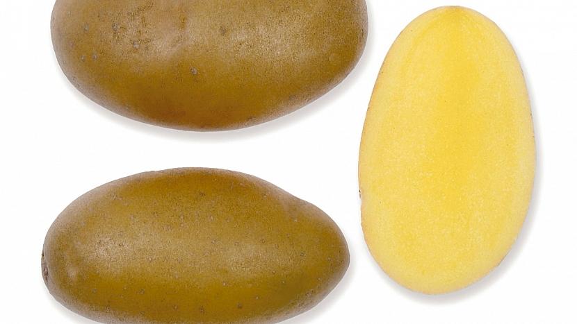 Brambory: raná až poloraná odrůda JASMÍNA