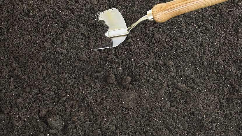 Jak a kdy se pustit do pěstování slunečnic 2