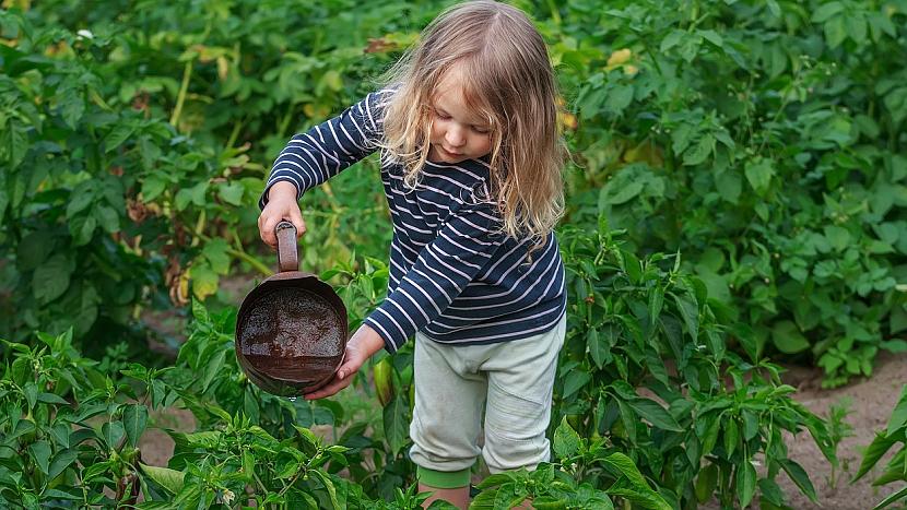 Jak pěstovat zeleninu pro labužníky 3