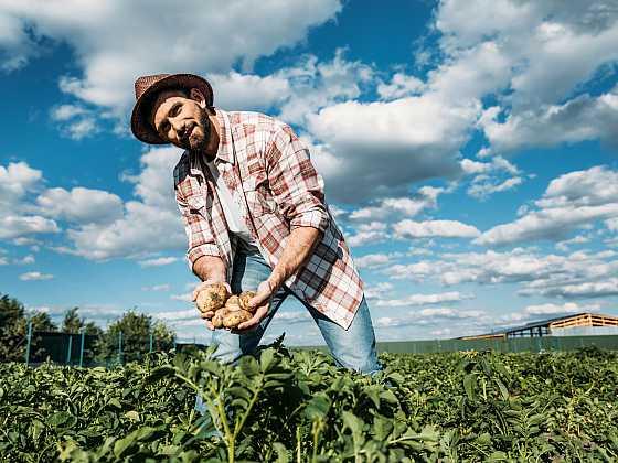 Zasazením brambor péče o ně nekončí (Zdroj: Depositphotos)