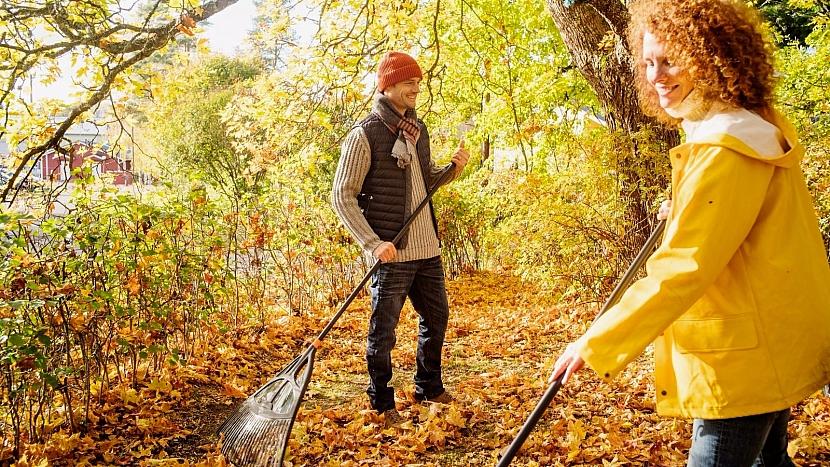 Spadané listí můžete využít jako mulč