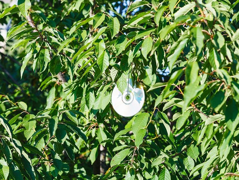 CD zavěšené na stromě