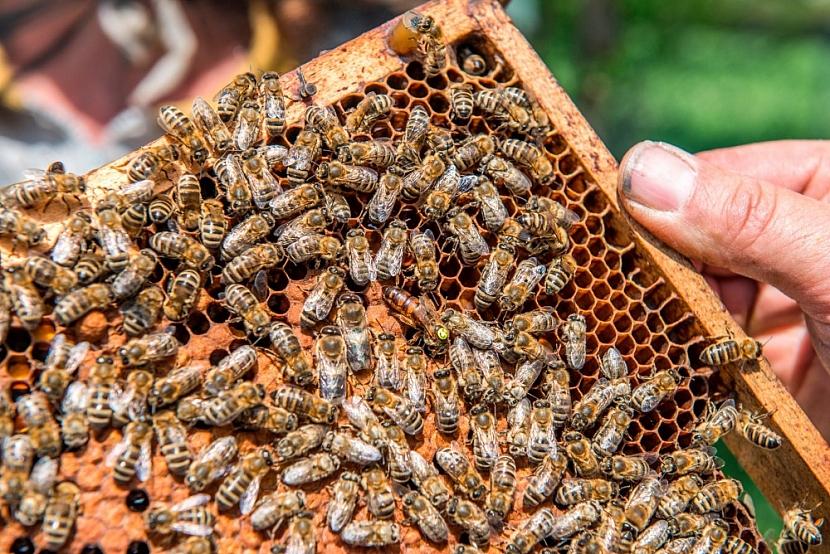 Rámeček se včelami