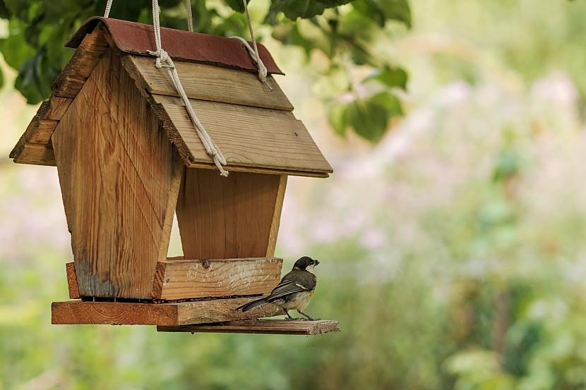 Listopad v zahradě: krmítko pro ptáčky