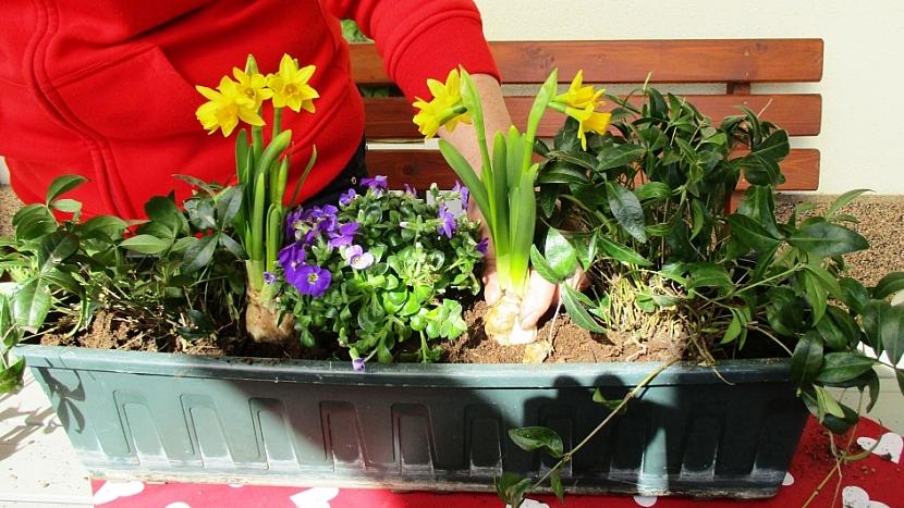 Jak si udělat svěží květinový truhlík aneb jaro je tady 8