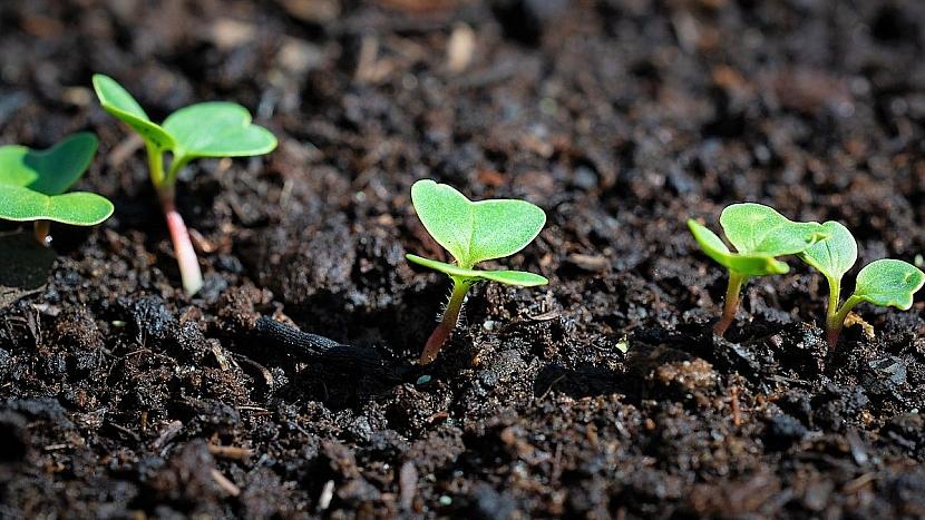 Co udělat v březnu na zahradě: ředkvičky vyklíčí už za několik dnů