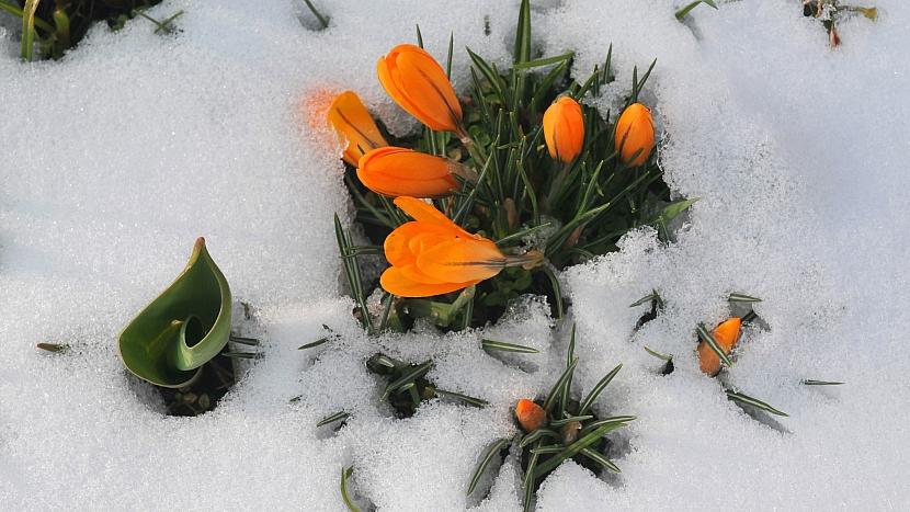Počasí v březnu: krokusům ani sněhové přeháňky na kráse neuberou