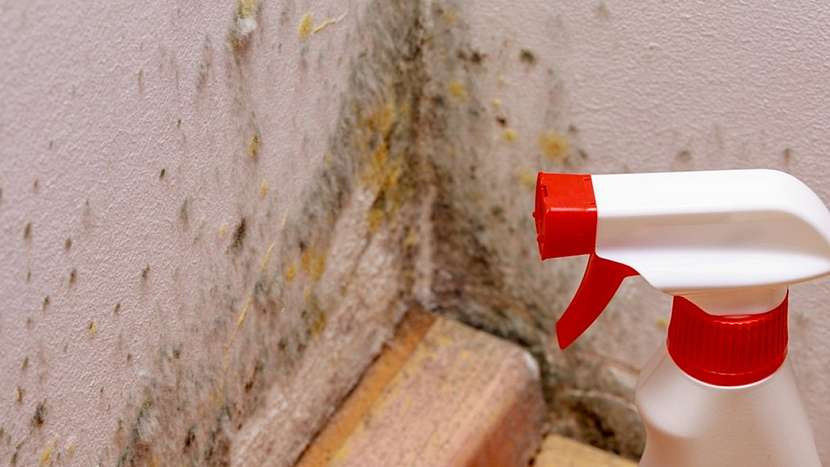 Jak se zbavit plísně v bytě: fungicidní přípravky pomáhají