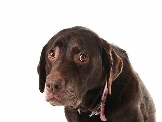 Poskytnout domov opuštěnému psovi je chvályhodné, znamená to ale také velký závazek nezklamat bolavou psí duši (Zdroj: Depositphotos)