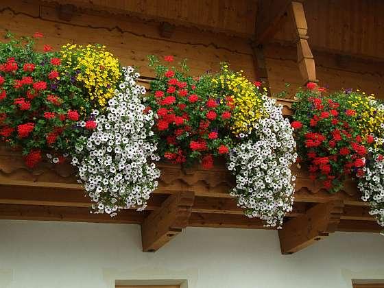 Pečujte o balkonové květiny tak, aby se vám bohatě odměnily záplavou květů (Zdroj: Ludmila Dušková)