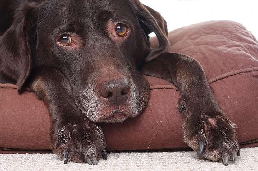 Smutný pes
