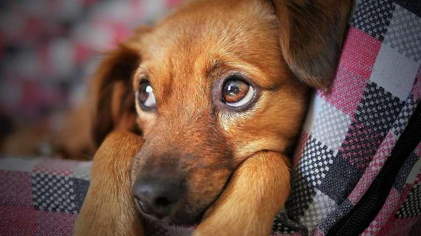 """Šťastný pes: čím dříve začnete štěně učit být samo doma, tím """"lehčí"""" to pak pro něj bude"""