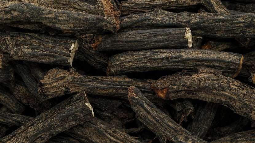 Kostival lékařský (Symphytum officinale): jako léčivka využívá především kořen