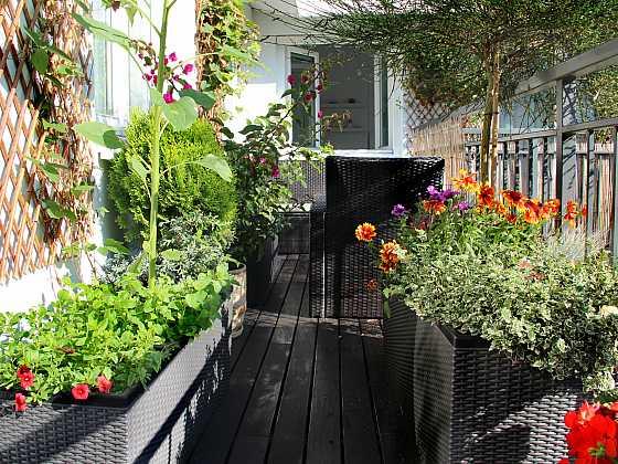Pěstování na balkoně či terase se rozhodně netýká jen květin (Zdroj: Depositphotos)