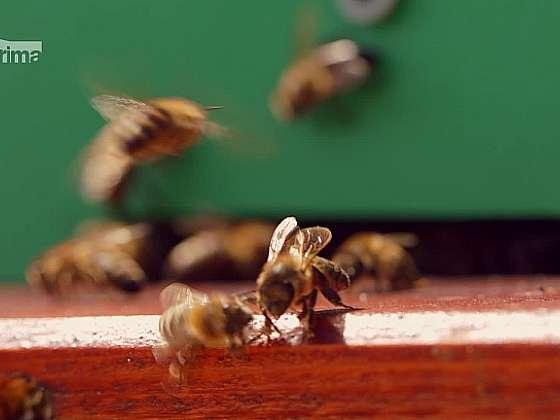 Zkuste si zařídit včelí úly na střeše vašeho domu (Zdroj: Prima DOMA)