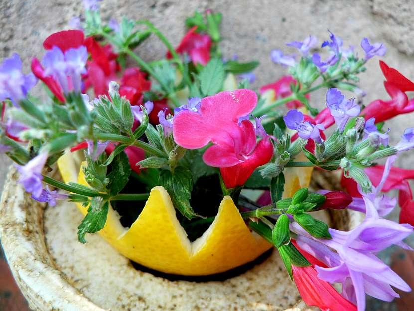 Kosicek z citrusu jako obal květináče