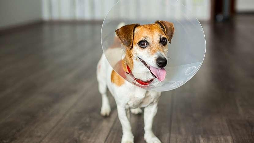 Pes s ochranným límcem