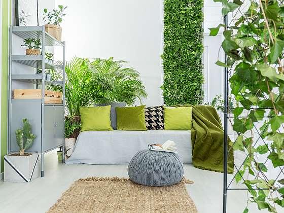 Pokojové rostliny vnesou do našeho domova příjemnou atmosféru (Zdroj: Depositphotos)