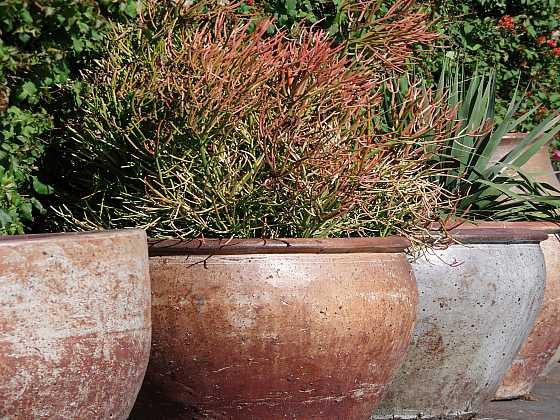 Rostliny v nádobách potřebují větší péči (Zdroj: Depositphotos)