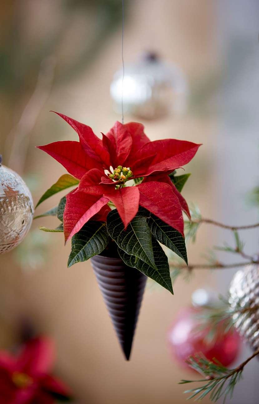 Christmas_Green_Spirit_05