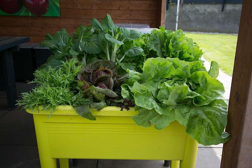 Zelenina v truhlíku