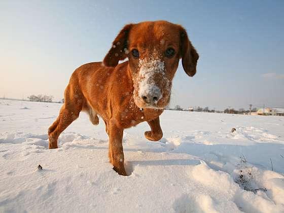 5 tipů, jak chránit svého psa před mrazem (Zdroj: Depositphotos)