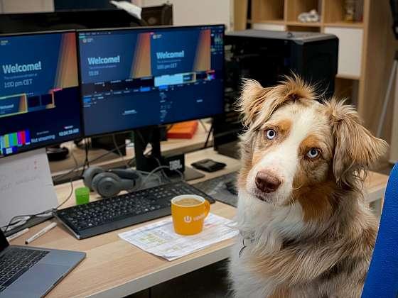 Když musí pes chodit do kanceláře (Zdroj: Yoggies.cz)