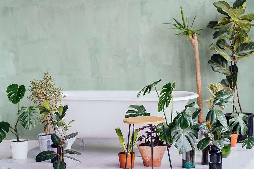 Pokojové rostliny rozestavěné kolem vany v koupelně