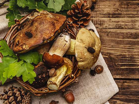 Čerstvé nasbírané houby se hodí pro přípravu oběda i večeře. Máme pro vás  3 recepty (Zdroj: Depositphotos (https://cz.depositphotos.com))
