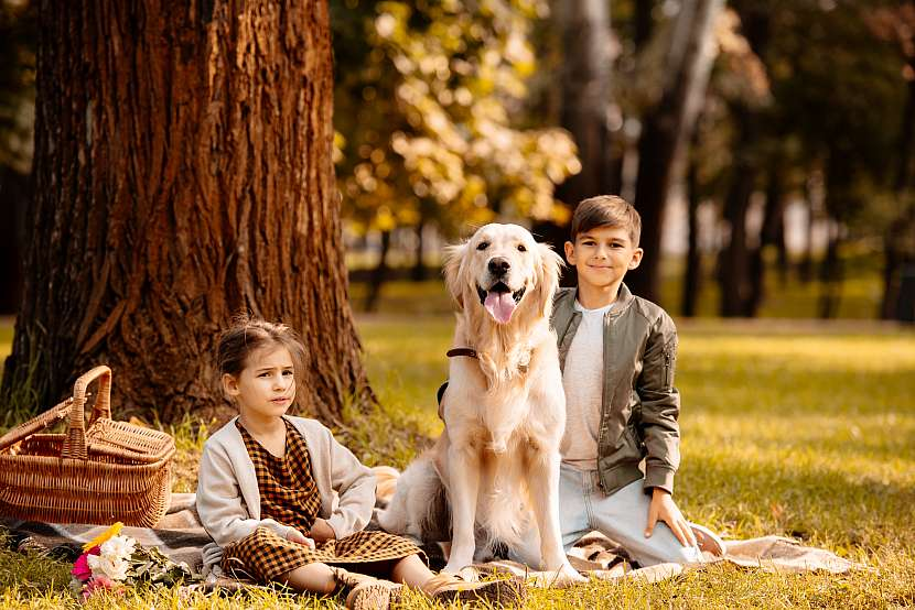 Pes, děti po stromem