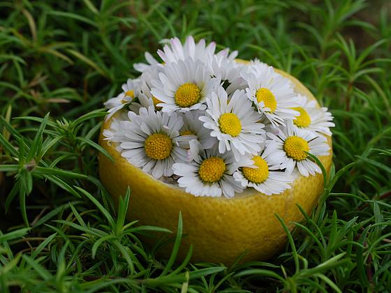 Zkuste si vytvořit méně tradiční dekorace z citrusové kůry a květů (Zdroj: Jana Hanšpachová)