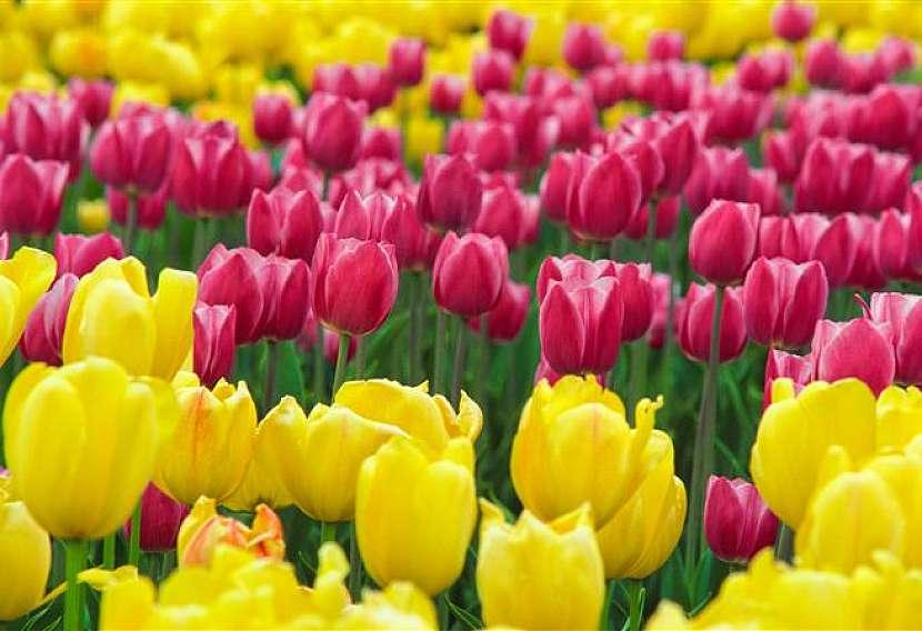 Udělejte si výlet za nádherou a vůní rozkvetlých květů