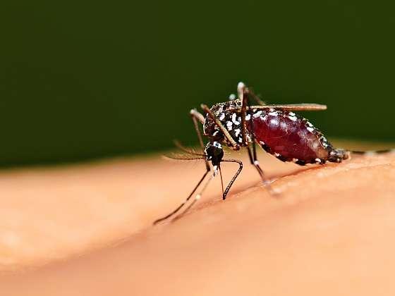 Někdy se komářímu ataku nevyhneme ani při sebelepší obraně. Co pak s tím? (Zdroj: Depositphotos)