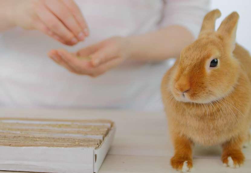 Jak nakrmit a zabavit králíka: mrkev a bylinymezi pruhy kartonu