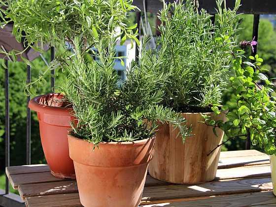 Na balkoně můžete pěstovat zeleninu i bylinky (Zdroj: Depositphotos)