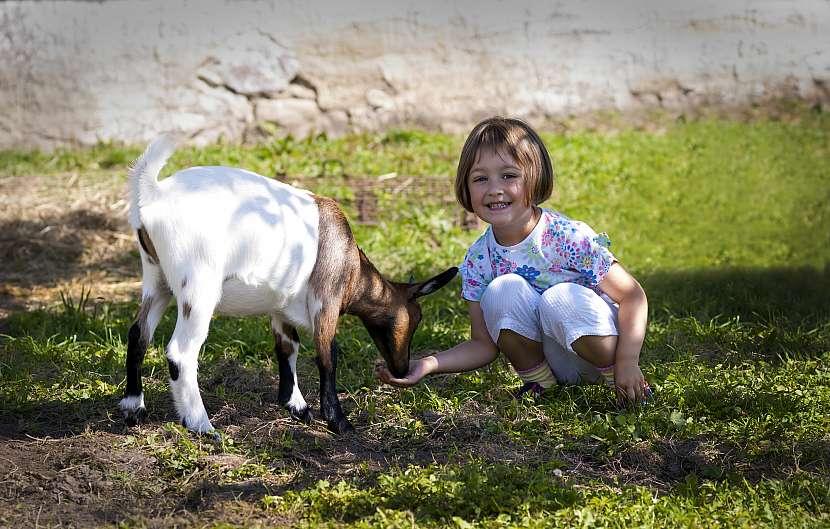 Koza a dítě