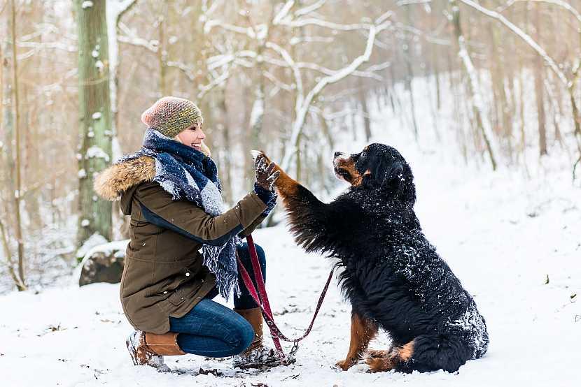 Pes, sníh