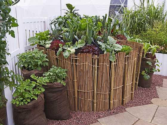 Brambory na balkoně či terase pěstovat lze, vyžadují ale velkou nádobu nebo pytel s úrodnou zemí (Zdroj: Depositphotos)