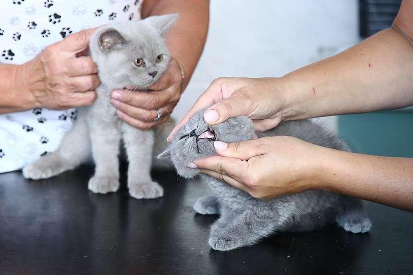 Očkování pravidelně opakujte i s preventivní kontrolou u vašeho veterináře